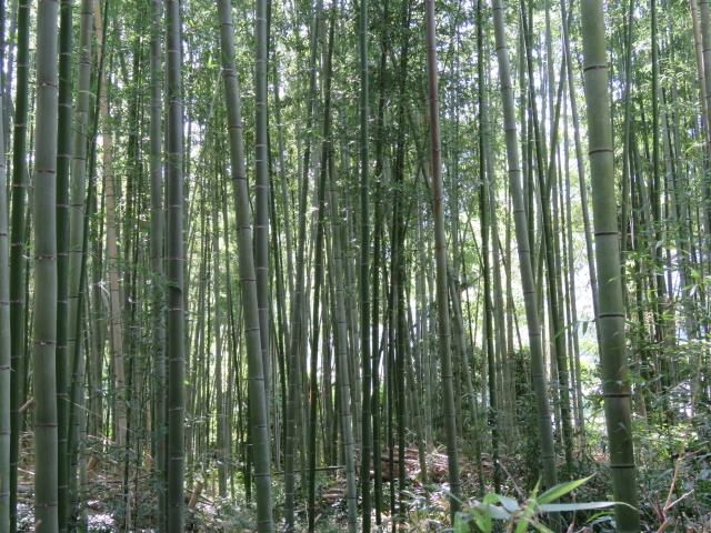 Kyoto Hozu trip-17